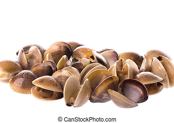 Live Edible Clams Isolated - Isolated macro image of live...