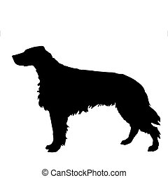 vector silhouette of the setter