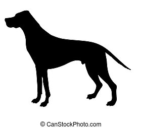 vector silhouette beagle isolated on white background