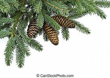 abeto, árbol, rama, conos