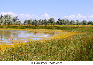 Salt marsh with water plants (III) - Salt marsh covered with...