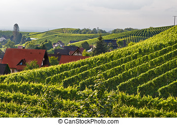 Vineyards in the Black Forest, Germany