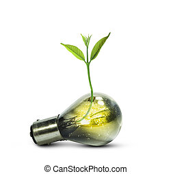 Light bulb with small plant growing inside