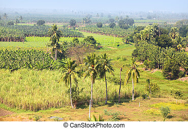 Rural farm lands in  Andhra pradesh India