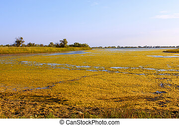 Salt marsh with water plants (II) - Salt marsh covered with...
