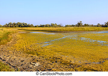 Salt marsh with water plants (I) - Salt marsh covered with...