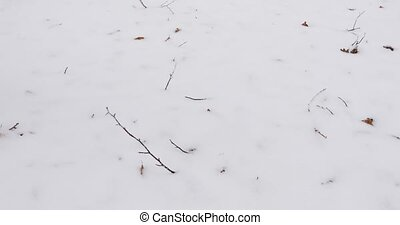 Male walking through snow forest - Male walking by in a snow...