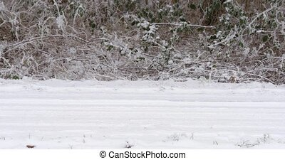 Car passing by on snowy road - Car crossing the screen...