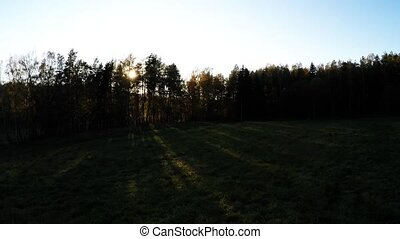 Sunset over a forest
