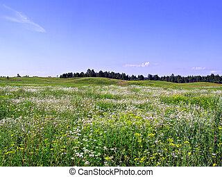 field near wood
