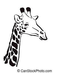 Vector of a giraffe head on white background, Wild Animals.