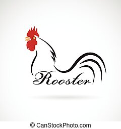 Vector of a rooster on white background. Farm Animals.