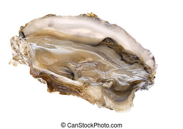 Fresh Oyster Isolated - Isolated image of a fresh oyster...