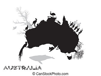 funny australia in the vectors
