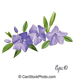 Branch of Periwinkle flowers - Branch of blue forget-me-not...