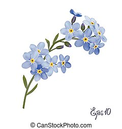 Branch of blue forget-me-not flowers. - Branch of blue...