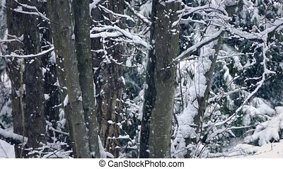 Tree Trunks In Winter With Snow Falling - Closeup of tree...