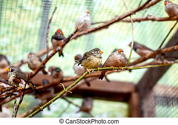 exotic image of a flock of small birds in the aviary...