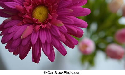 Close-up of gerbera flower on a light background