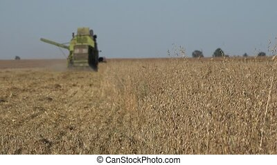 rural combine work in oat field at harvest time in farm. -...