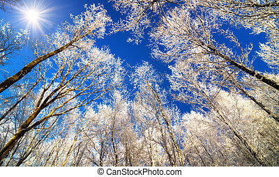 Snow on treetops against the deep blue sky - Winter...