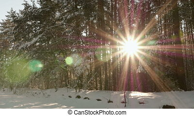 Sun shines through the trees