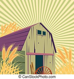 Farm rural scene with barns and golden wheat field. Organic...