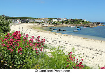 Old town beach red valerian, St. Mary's, Isles of Scilly,...