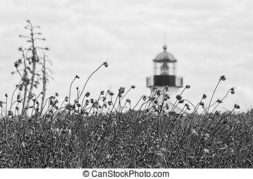 Distant Lighthouse (B&W) - The brush surrounding the Point...