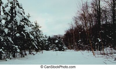 Winter forest looped zoom