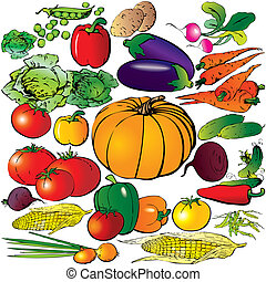 Vegetables - Collection of different vegetables on a white...