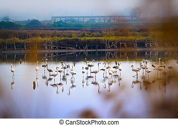 flamingos,  aveiro