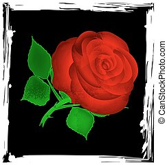 abstract black and red rose