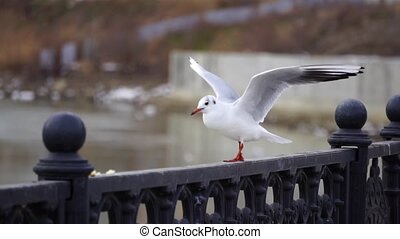 Gull on iron railing on river in cloudy day and big...