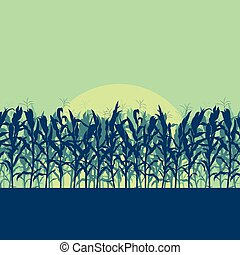 Corn field evening or morning light landscape vector - Corn...