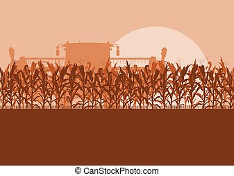 Corn field with harvester evening or morning light landscape...