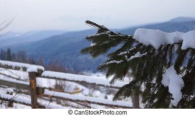 Snow pines winter mountain - Snow pipes winter mountain...