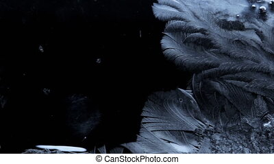Branches of frozen water crystals fast appear on the cold...