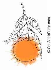 Tangerine fruit illustration - Hand drawn tangerine fruit...