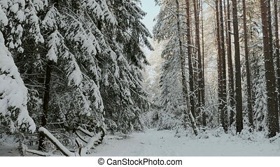 Snowy day in the forest.
