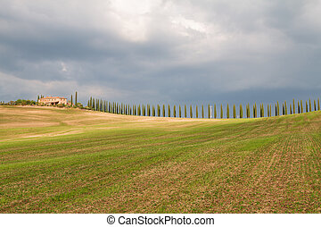 Tuscany landscape, beautiful green hills and cypress tree row springtime
