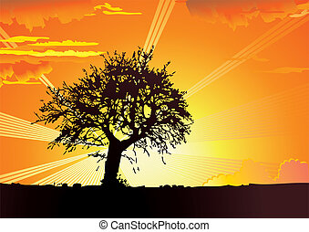 Sunrise. - Sunrise in the park. Vector art-illustration.