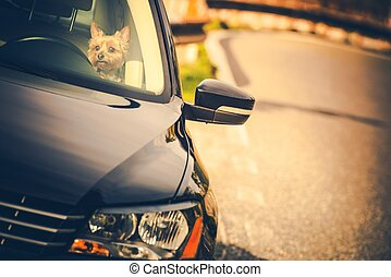 Leaving Dog in a Car During Hot Day Concept Photo. Pet Care...