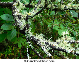 Lichen on a Tree Branch