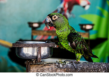 Parrot, lovely bird, animal and pet