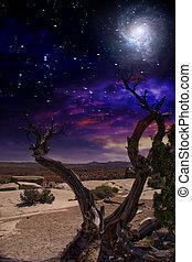 Desert Tree and Horizon