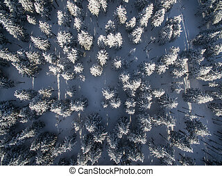 Aerial view of winter forest - trees covered with snow