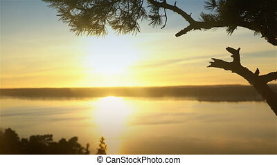 Scandinavian landscape. Lonely pine at sunset on a cliff. Dolly shot.