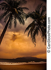 Silhouette of palm tree at beautiful tropical sunset