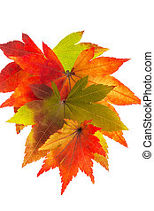 colorful autumn leaves - the colorful messengers of autumn....